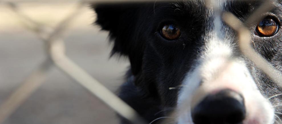 dog through a fence.jpg