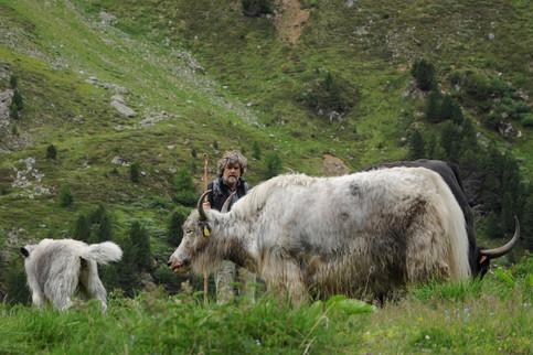 Rheinold Messner con i suoi yak, Solda, 2012