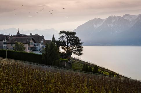 Laveaux, Vaud, 2020