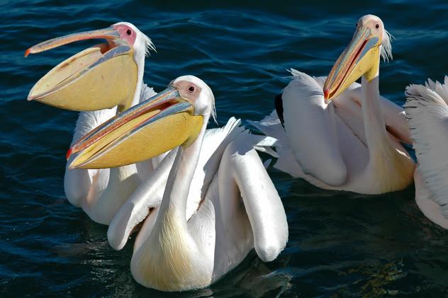 Walvis Bay, Namibia, 2006