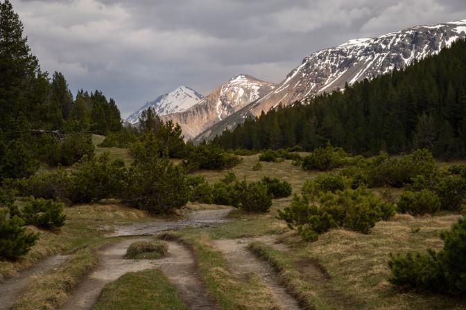 Parco Nazionale Svizzero, 2020