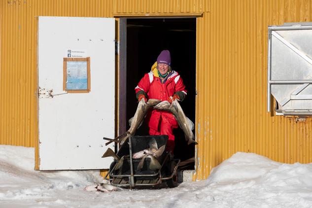 Nusfjord, 2019