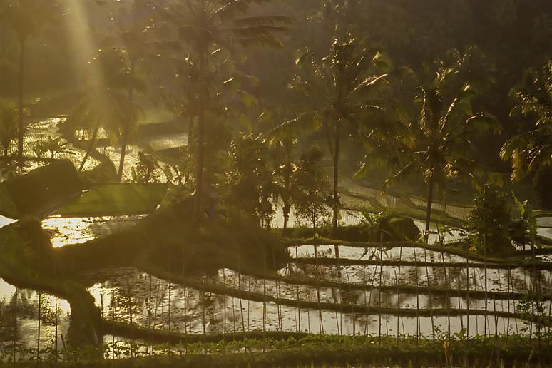 Mayang, Bali, 1995