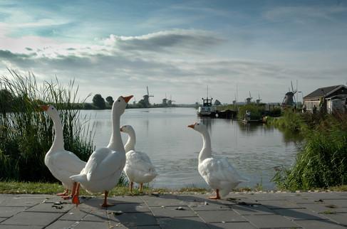 Kinderdijk, 2009