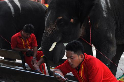Elephant Taxi, Kraal, Tailandia, 2014