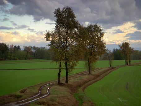 Bereguardo, Pavia, 2008