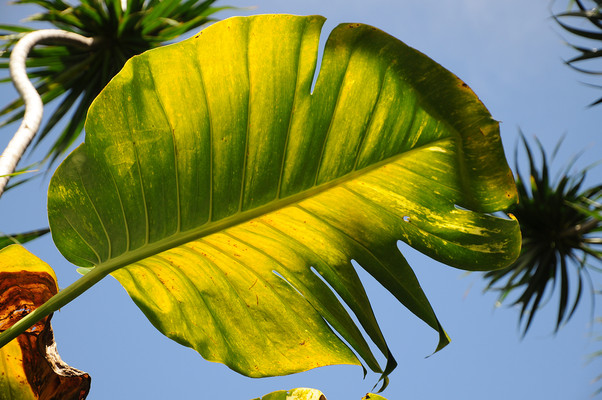 Hana, Maui, Hawaii, 2013