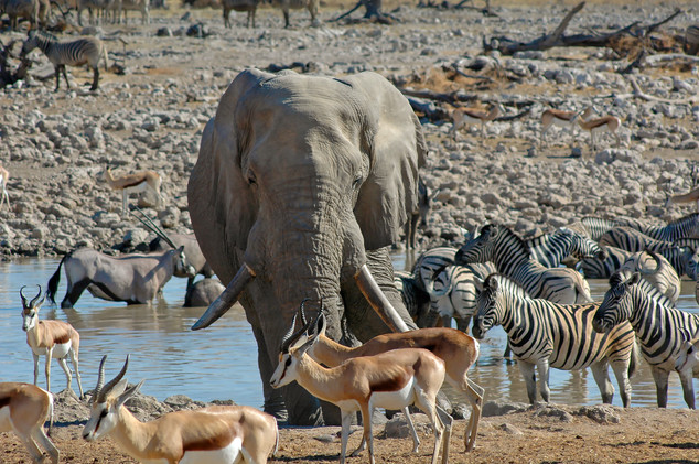 Etosha Nat'l Park, Namibia, 2006