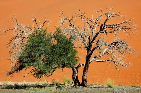Dune 45, Sossusvlei, Namibia, 2006