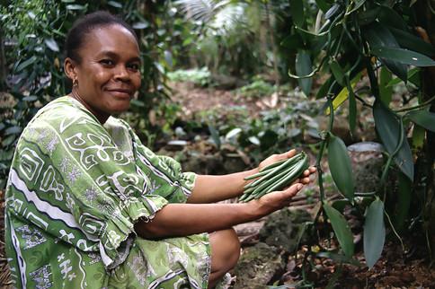 Coltivazione di Vaniglia, Lifou, Nuova Caledonia, 2000