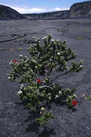 Kilauea Iki, Volcanoes, Hawaii, 1997