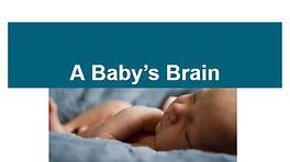 Baby Brain ppt.JPG