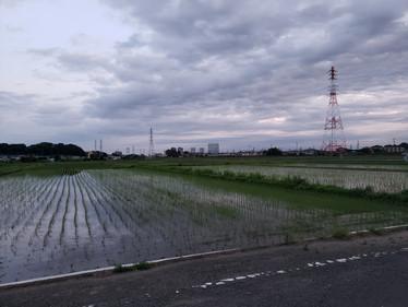 田植え by H.YAMAMOTO