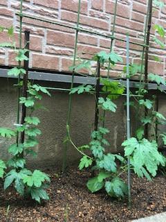 家庭菜園始めました! by N.KIDO