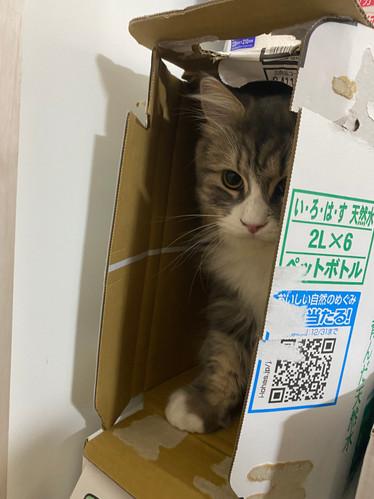 猫日記10 by Y.KOMIYA