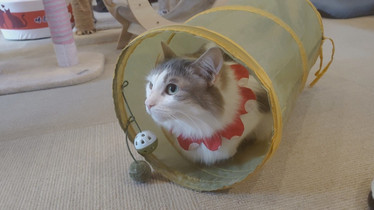 猫カフェ by T.MIZUGUCHI