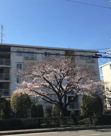 春~! by E.YAMAGUCHI