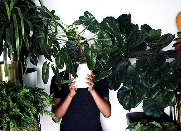 THE PLANT PARENT