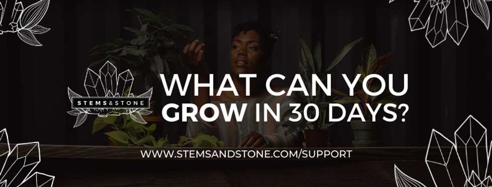 STEMS & STONE cover (1).png