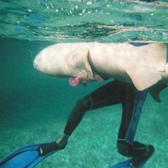Nurse Shark Snorkeling at Shark Ray Alley