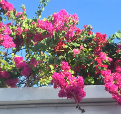Flowers at Athens Gate Lighthouse Beach