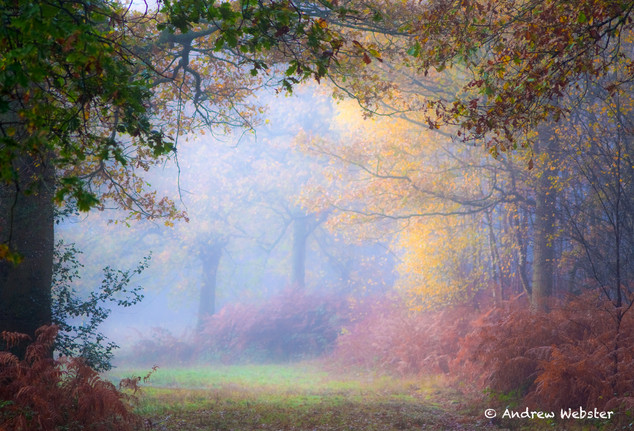 Holmwood Common, Surrey