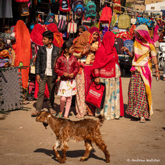 Women shopping with goat