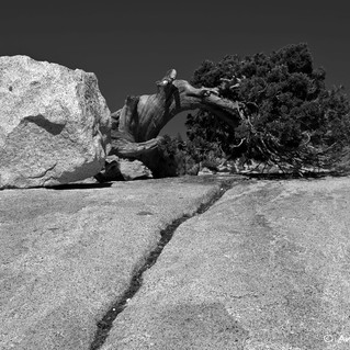 Boulder and Bristlecone