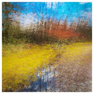 Impressions of Holmwood Common