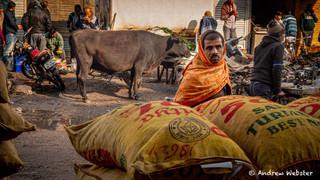 Turmeric wholesaler, Old Delhi