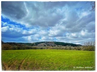 Redlands Wood, South Holmwood