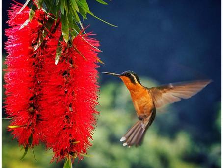 Wonderful wildlife in Costa Rica