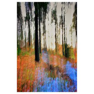 Redlands Winter Colours