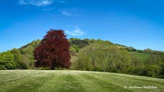 Box Hill, Dorking Surrey