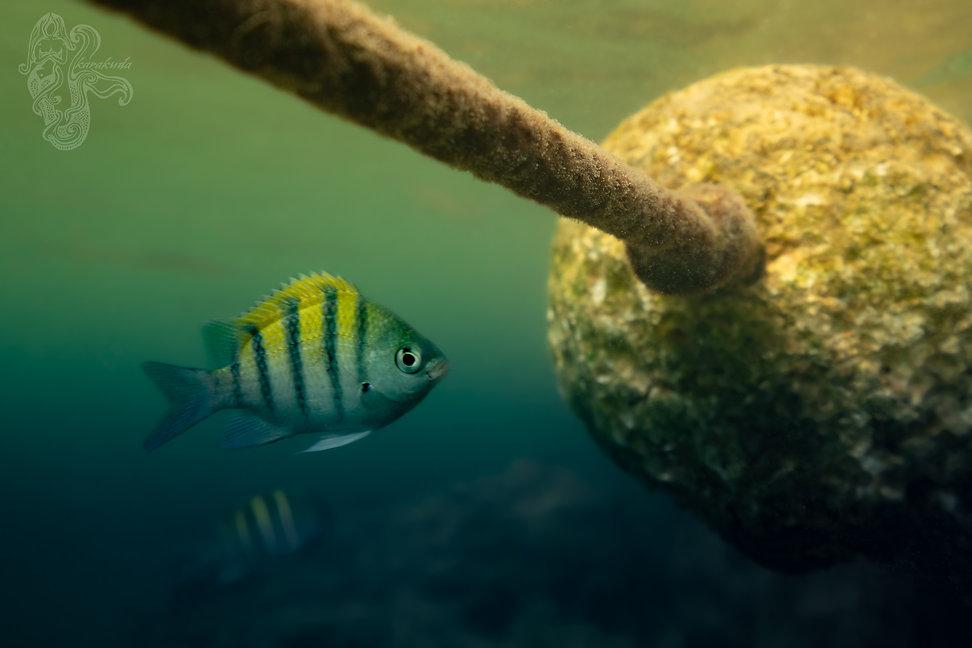 Fish&Ball1SM.jpg