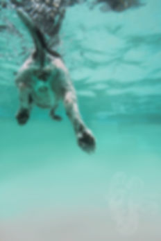 UnderwaterDogButt-Edit.jpg