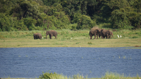 Elephants from across the lake of my hotel room
