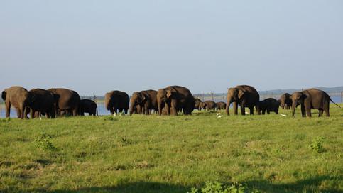 Elephant Safari - Habarana
