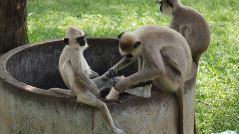 More monkey's!