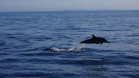 Dolphin & Whale watching in Mirissa