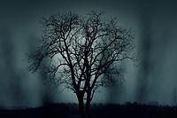 dark-fog-grass-1404.jpg