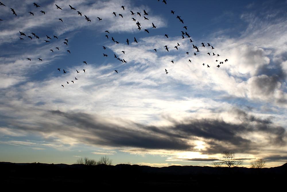 Birds fly high in the sky as the sun sets.