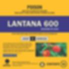 Lantana 600