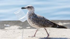 Comment réduire les déchets plastique ?