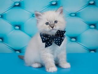 Новые фоточки котят!