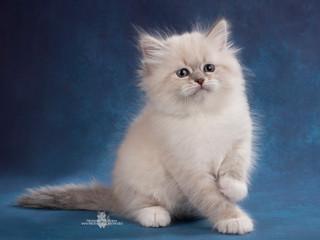Свежие фотографии наших котят!