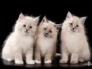 Больше котиков!