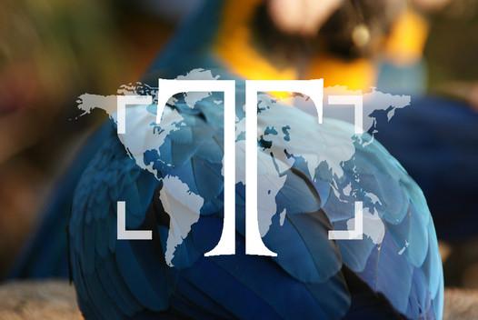 Takeshi Photography Logo