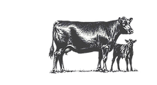 BCA Cow No Background.png