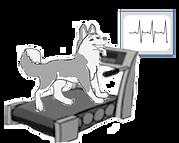 treadmill_edited.png